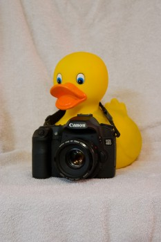 [oversize duck posing with a camera]